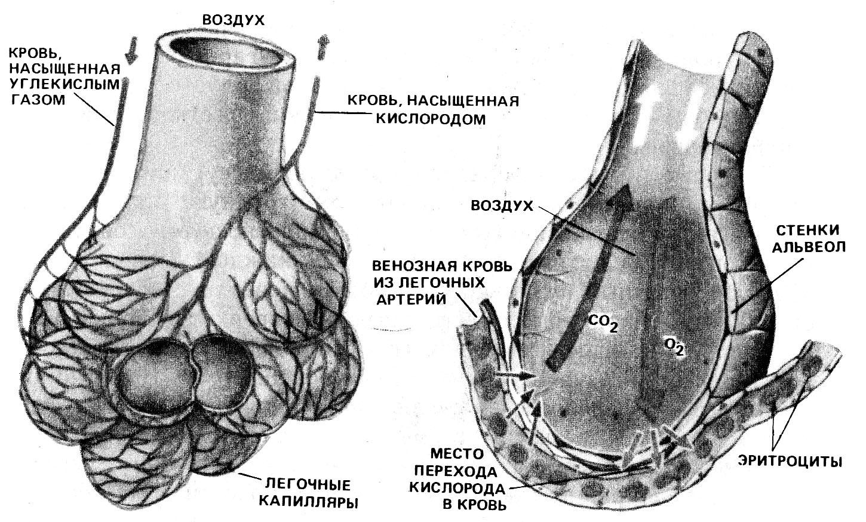 схема лечения бронхиальной асмы преднезалоном