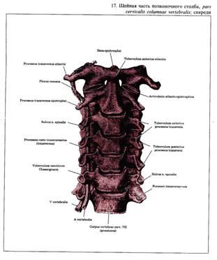 Артроз суставов дисков поясничного отдела
