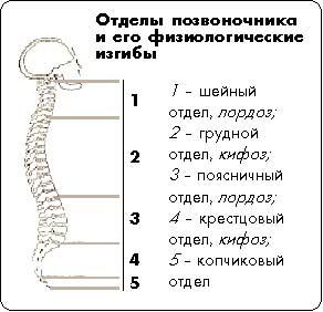 Упражнения для мышц позвоночника при сколиозе при дцп